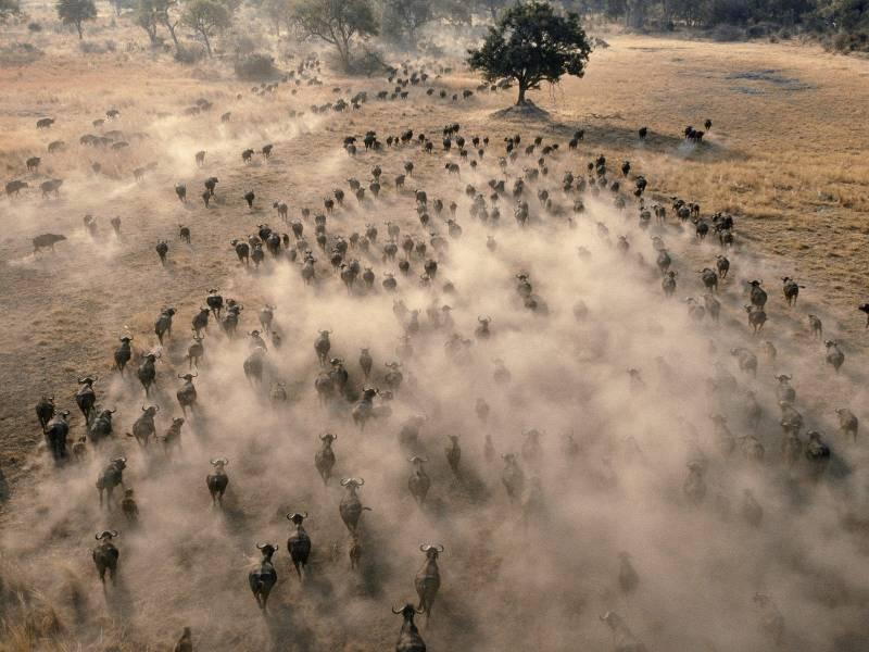 la synchronisation dans les troupeaux