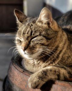 sieste du chat